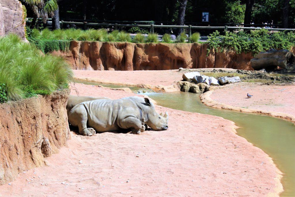 Бергамо с детьми, бергамо для детей, зоопарк Бергамо